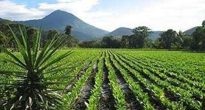 Volcán Chingo entre Guatemala y el Salvador