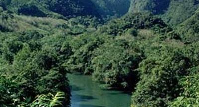 Mosquitos, malaria y el uso de repelente en Guatemala