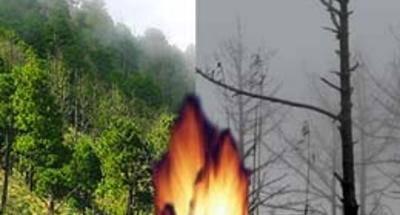 Incendios forestales: Acatenango ha cambiado