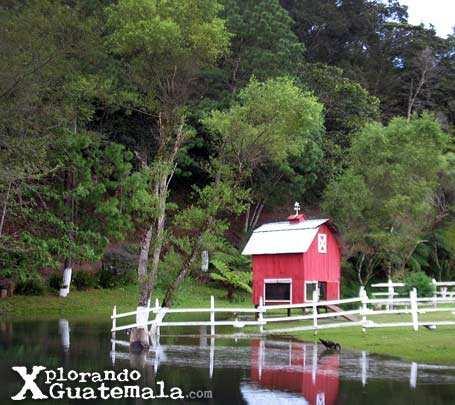 Café La Granja - Alta Verapaz / foto 2