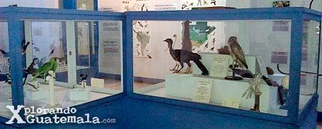 Museo de Historia Natural / foto 9