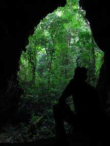 Vista hacia el bosque. Fotografía por Explorador