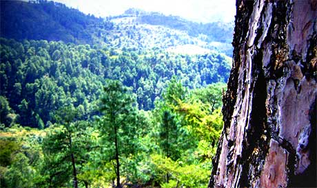 Paisaje boscoso en Zacapa.