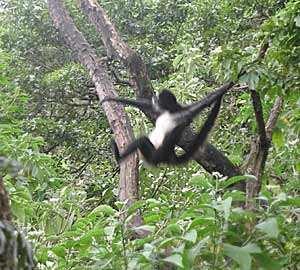 En San Buenaventura verás a los monos a corta distancia.