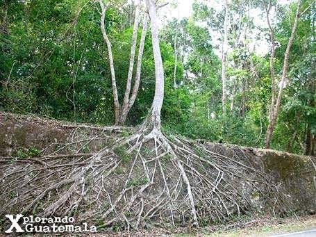 Viaje relámpago a Tikal-foto-57--9-1-2014