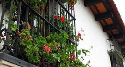 Geranios, flores en el Balcón