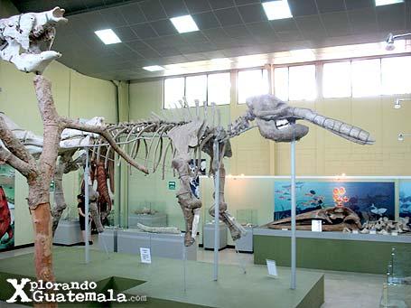 Museo de Paleontología y arqueología Roberto Wookfolk Saravia: entre mastodontes y megaterios / foto 2