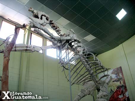 Museo de Paleontología y arqueología Roberto Wookfolk Saravia: entre mastodontes y megaterios / foto 3