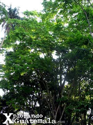 Parque El Rosario - Sayaxché / foto 4