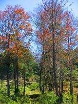 Los bosques y la naturaleza rodean el recorrido por las verapaces. Foto por Explorador.