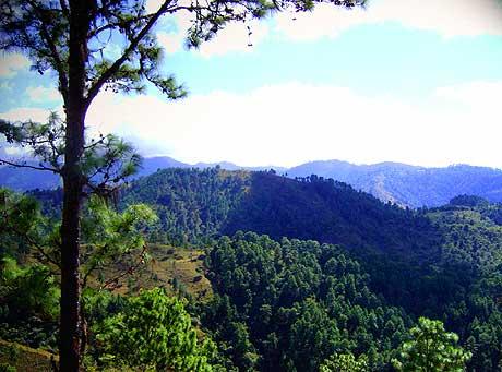 Verdosidad de los altos de la Sierra en Zacapa.